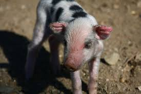 real baby farm animals. Modren Baby And Real Baby Farm Animals R