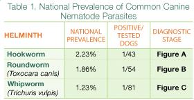 Canine Parasite Egg Identification Chart Parasite Protocols Canine Intestinal Helminths Todays