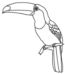 Small Picture Toucan Bird Facts and Free Coloring Page