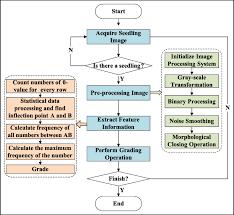 Grading System Chart Flow Chart Of Seedling Grading Procedure Download