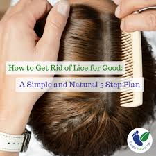 natural lice treatment