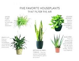 small office plant. Small Desk Plants Office Perfect Plant Enchanting Decorating .