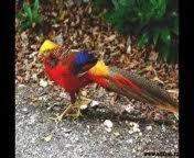 paradisebirds katrin nude Photos Gallery - MyPornSnap.top