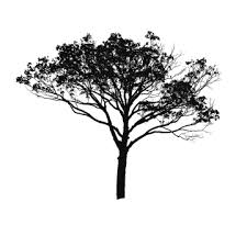 Free Collection Of Tree Illustration Png Download On Bankkita Cliparts