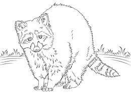 Gatto Disegni Da Stampare E Colorare Beautiful Gatti Gatti Disegni