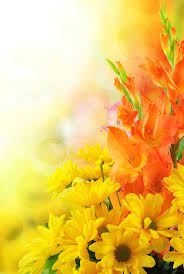 Flower Background Hd Images Free Download