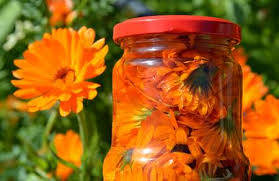 Image result for marigold health use free pictures