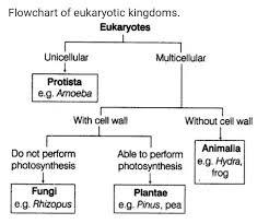 Five Kingdom Classification Chart 11 Flow Chart Of 5 Kingdom Classification