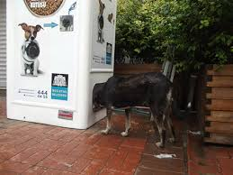 Dog Vending Machine Delectable In Istanbul Stray Dogs Get Their Food From Vending Machines