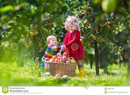 baby green apple tree. royalty-free stock photo. download kids playing in apple tree baby green