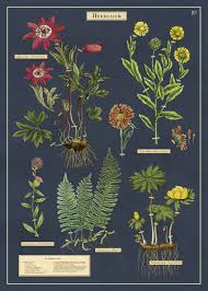 Cavallini Co Herbarium Decorative Wrap
