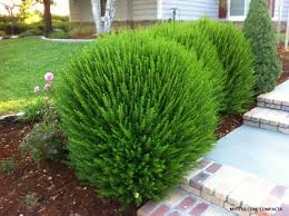 Small Picture Best 25 Shrubs ideas only on Pinterest Landscaping shrubs