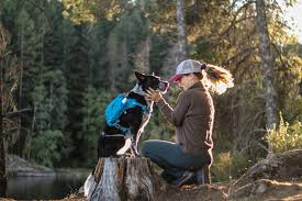 Kurgo - Keperluan Haiwan Peliharaan - Salisbury, Massachusetts | Facebook -  64 Semakan - 2,751 Foto