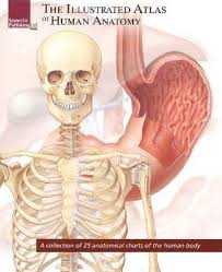 Free Pdf Illustrated Atlas Of Human Anatomy A Collection