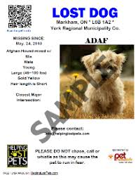 how to make lost dog flyers you can make flyers here by using their templates if you ever lose