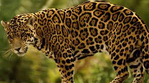 Bildergebnis für tiere