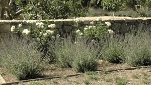 Small Picture Mediterranean Garden Ideas YouTube