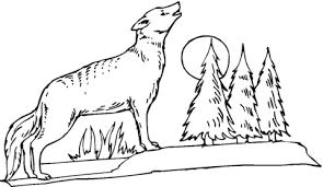 Disegno Di Il Coyote Che Ulula Alla Luna Da Colorare Disegni Da