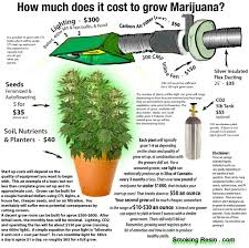 Cannabis Plant Growth Chart Pin On Interesting Things