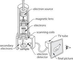 Scanning Electron Microscope Sem Photonics Dictionary Edu