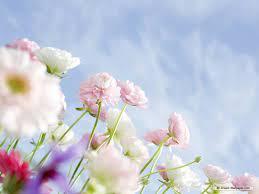 Top free flower wallpaper HD Download ...