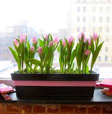 indoor window garden. indoor window garden box .