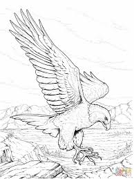 bald eagle template bald eagle coloring page 9740