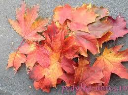 Résultats de recherche d'images pour « открытка с днем рождения засушенные кленовые листья »