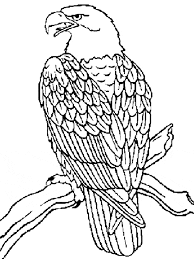 Small Picture Eagle coloring page Eagle free printable coloring pages animals