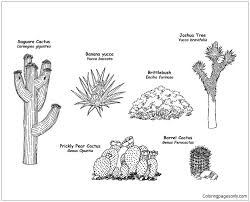 Small Picture The Wild Flowering Plants Of The Desert Coloring Page Free