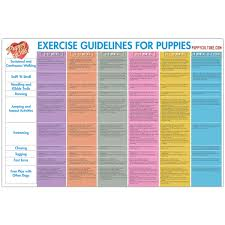 Age Appropriate Exercise Poster Puppy Culture