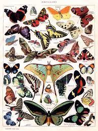 Vintage Poster Butterflies Papillon Room Art Decor Home