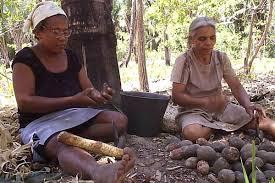 Resultado de imagem para quebradeiras de coco em coroatá