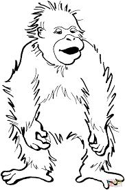 Disegno Di Cucciolo Di Orangotango Da Colorare Disegni Da Colorare