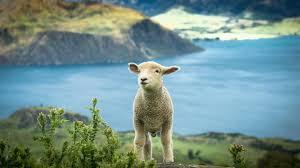ニュージーランドのおすすめホテルを格安予約│Agoda®で検索・比較