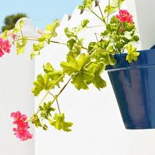 diy andalusian wall planters for your