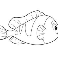 fish drawing for colouring. Perfect Drawing FISH Of OCEANA  For Fish Drawing Colouring