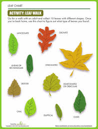 Leaf Shapes Plant Lessons Parts Of A Plant Science