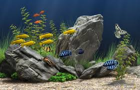 animated aquarium wallpaper for windows 7 free.  Free Beautiful Animated Aquarium Desktop Wallpaper Windows 7 Powercore Info Throughout For Free L