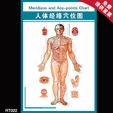 Buy Standard Human Body Acupuncture Points Acupuncture And