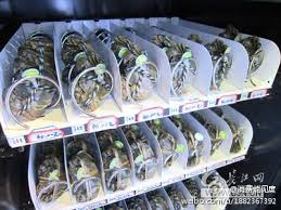 Live Crab Vending Machine Beauteous One More Way China Is Outinnovating The US With A Vending Machine