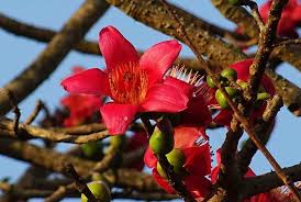 10 flowering trees in india and where
