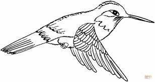 Small Picture 20 Free Printable Hummingbird Coloring Pages EverFreeColoringcom