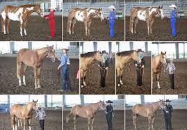 4h Horsemanship Rome Fontanacountryinn Com