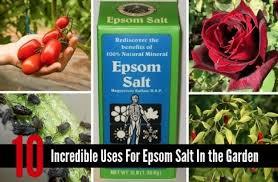 epsom salt gardening. Fine Gardening 24 Epsom Salt Gardening Newest Salt Gardening 7 Uses For In The Garden  With Medium Throughout O