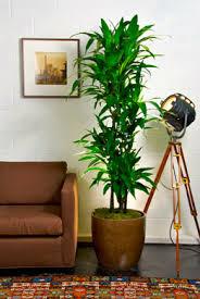 best indoor plants for office. #1 Best Office Plant Indoor Plants For