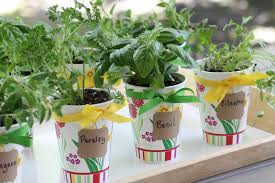 fullsize of masterly fresh herb party favor diy fresh herb party favor diy catch my party