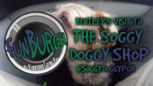 Bentley's Visit To The Soggy Doggy Shop in Wexford! - YouTube