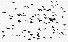 flock of birds clipart. Exellent Clipart Bird Flight Flock Clip Art  Flock Birds On Of Birds Clipart R