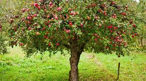 Can You Prune Fruit Trees In The Summer